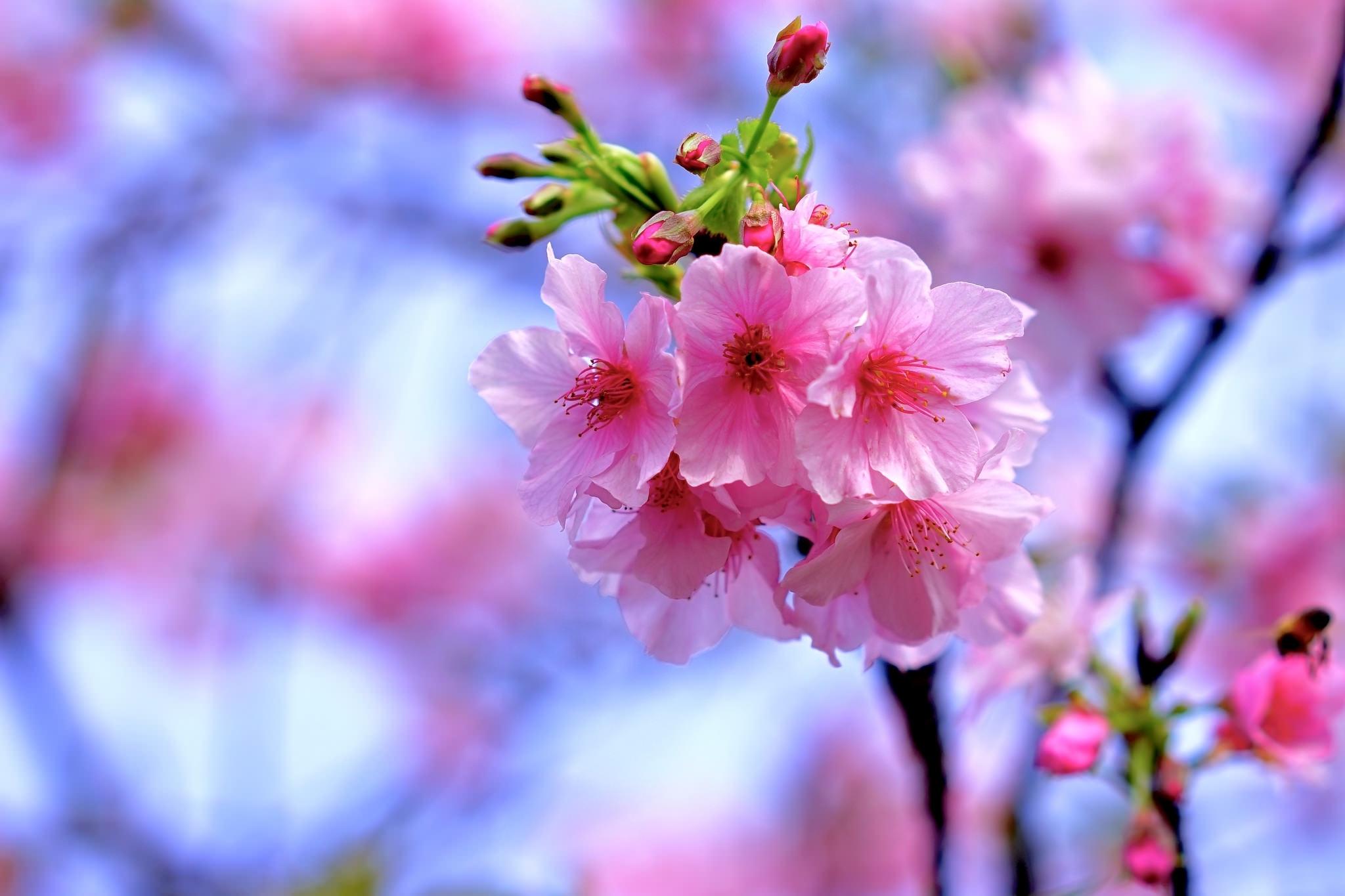earth-blossom-38434